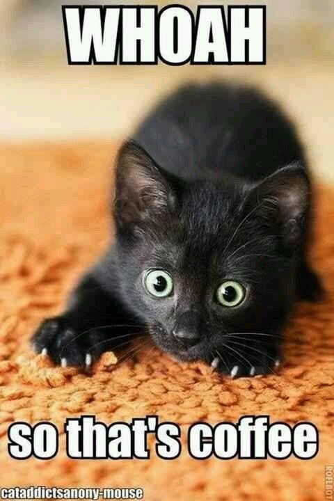Top 30 Funny cat Memes   Funnies   Gatos, Animales bonitos ... #blackCoffee