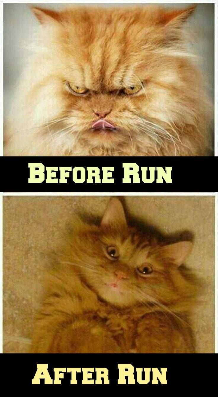 Exactly | Running Quotes & Funny Memes | Coffee humor, Coffee ... #iLoveCoffee