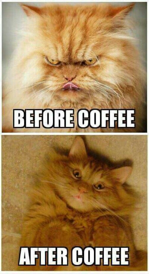 Coffee | Quotes & Pictures in 2019 | Coffee humor, Coffee quotes ... #iLoveCoffee