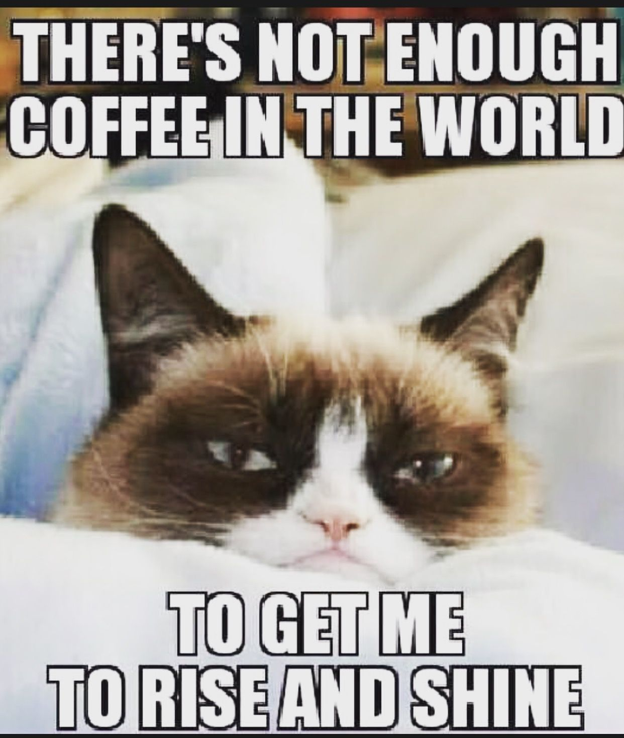 Pin by CatandKittenLand on Catsandkittens   Funny pictures, Funny ... #notEnoughCoffee