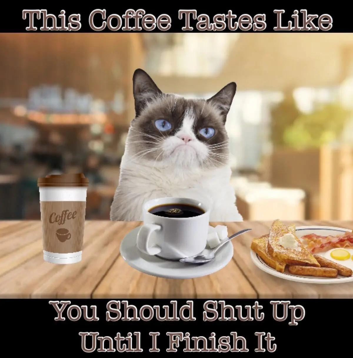 Grumpy Cat Coffee Memes | Coffee in 2019 | Grumpy cat humor ... #funnyCoffee