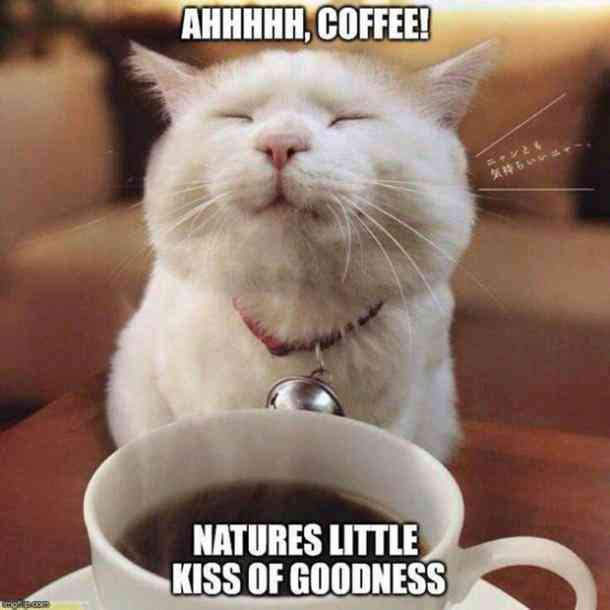 40 Funny Coffee Memes & Quotes For March — Caffeine Awareness ... #coffeeBuzz