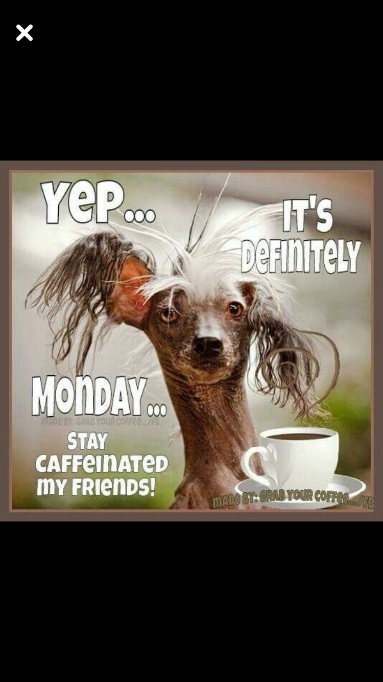 Monday Coffee | Need Coffee Pics/Quotes/Signs in 2019 | Funny good ... #sarcasticCoffee