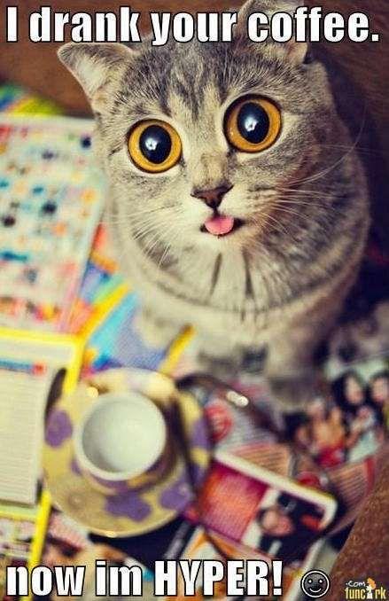 i drank your coffee, now i'm hyper - cat   Coffee Animals   Funny ... #coffeeNow