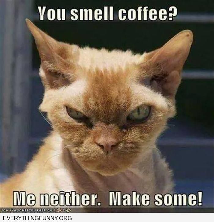 funny angry cat do you smell coffee me neither make some   Funny ... #angryCoffee