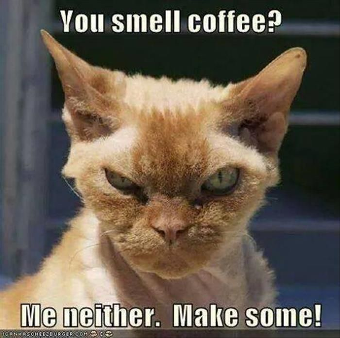 Did I hear the Gestapo demanding something? No? Me neither ... #angryCoffee