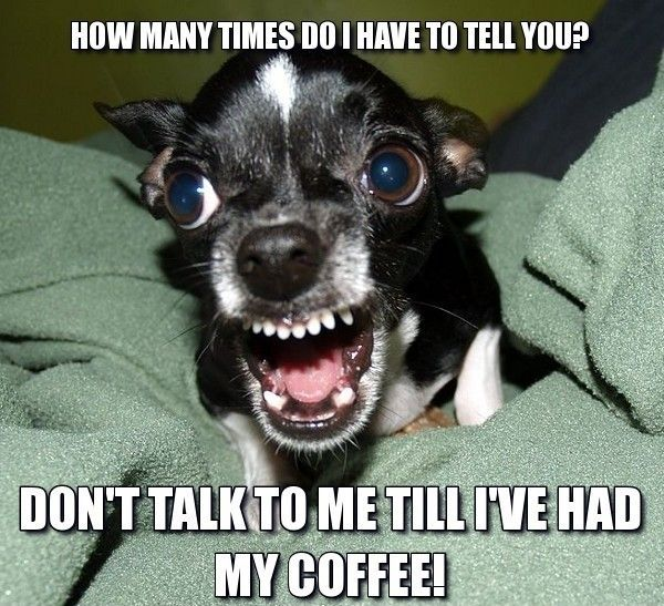 80 Good Morning Coffee Memes & Images to Kick Start Your Day #angryCoffee