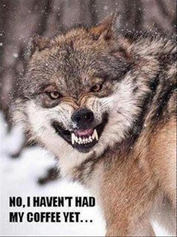 Funny Animal Pictures - 60 Pics #angryCoffee