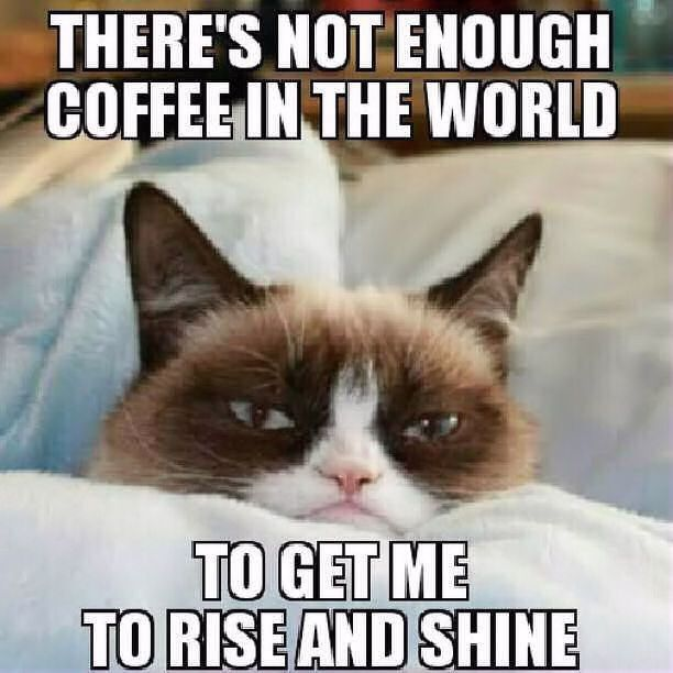 Not enough coffee in the world grump cat memes meme funny quotes ... #notEnoughCoffee
