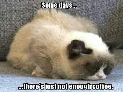 Not enough coffee #grumpycat   cats and kittens   Pinterest ... #notEnoughCoffee