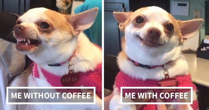 58 Tweets That People Who Can't Live Without Coffee Will ... #coffeeAddict