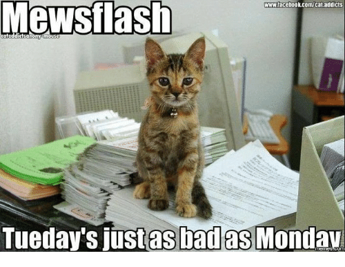 Mewstlash Wwwtacebookcomcat Addicts Tueday's Just as Bad as Mondav ... #coffeeAddict