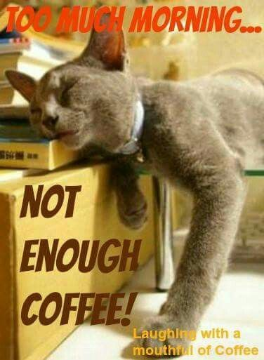 Too much morning, not enough coffee.   Cats Meow!! in 2019 ... #notEnoughCoffee