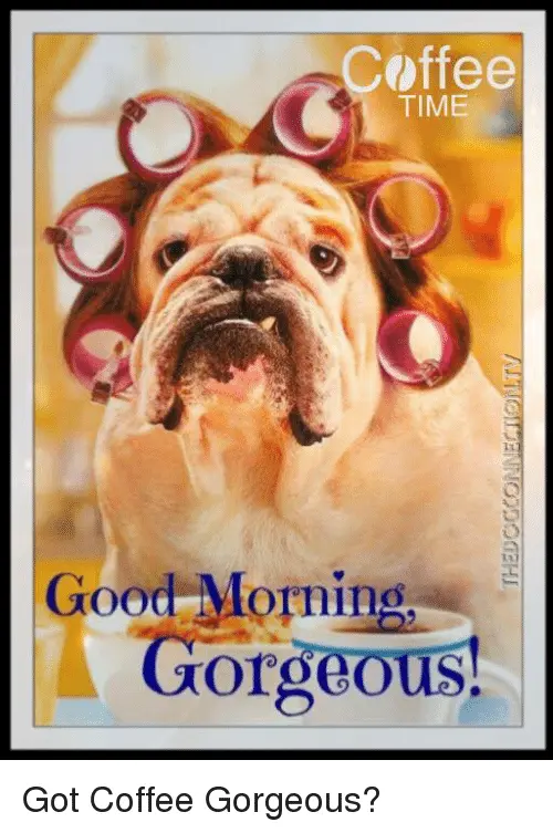 Coffee TIME Good Morning Gorgeous! Got Coffee Gorgeous? | Meme on ... #coffeeTime