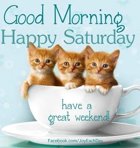Good morning. Happy Saturday from the cats!! #saturdayCoffee